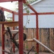 Image: Cat Enclosure